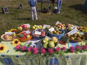 выставка яблок